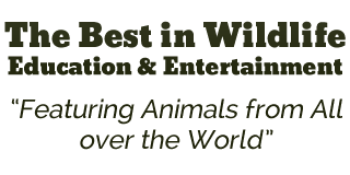 The Best in Wildlife Education and Entertainment
